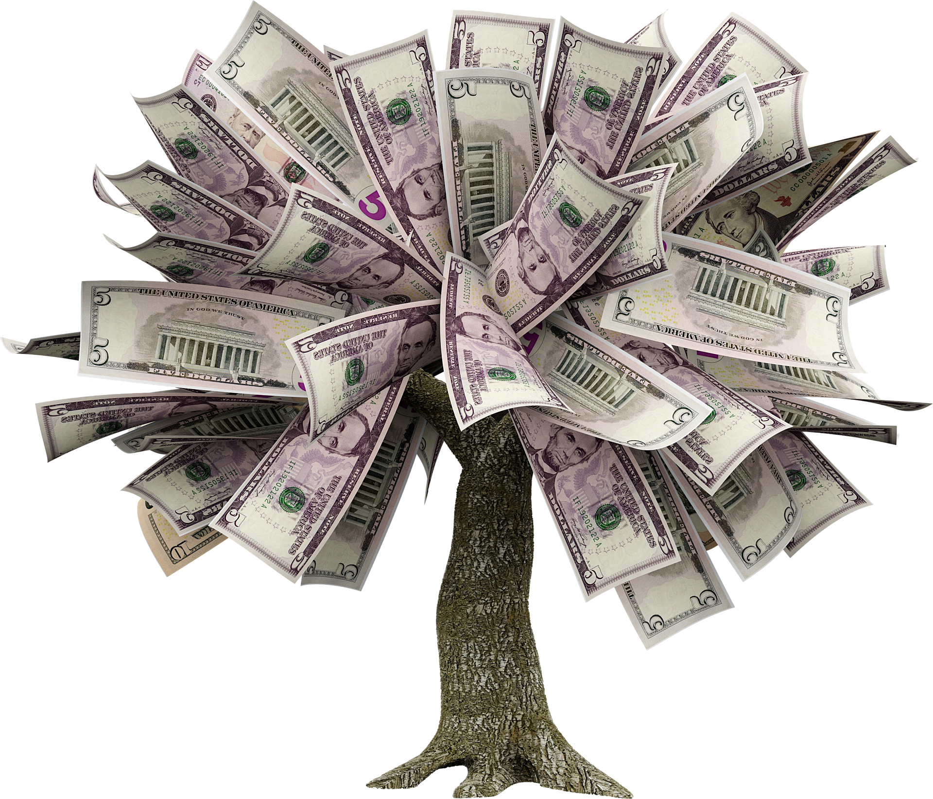 how to grow a money tree
